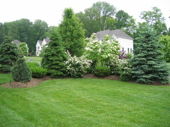 Creating Privacy with Landscaping
