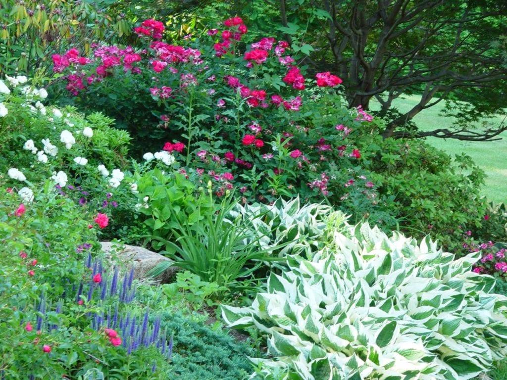 Improve Your Landscape | Parker Homescape