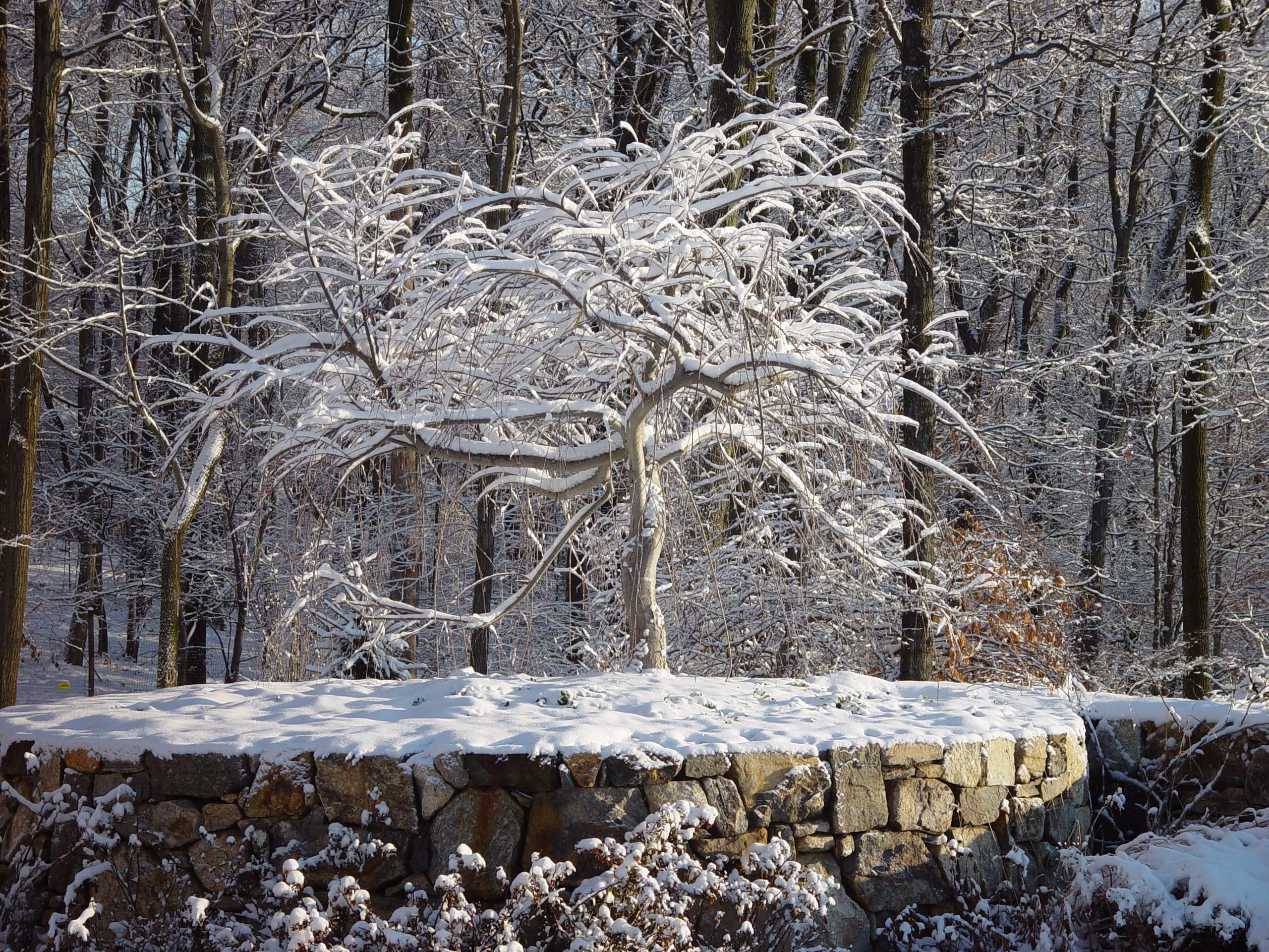 Turn Your Outdoor Oasis into a Winter Wonderland